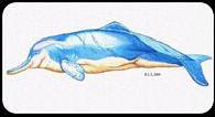 Baiji (Yangtze River Dolphin)